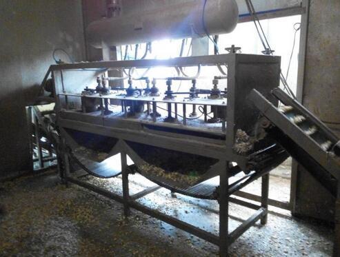 大蒜加工机械设备展示
